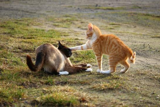cat-1184762_960_720